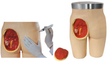 Adult Intramuscular Injection Training Mannequin