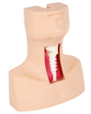Tracheotomy & Endotracheal Intubation Model