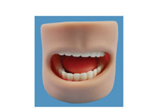 Teeth Model in Oral Cavity
